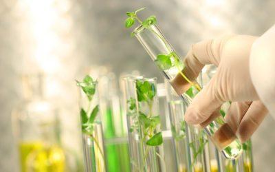 Are GMO's Contributing to Chronic Illness?